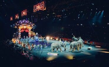 These Are Some of the Most Horrifying Circus Accidents in History